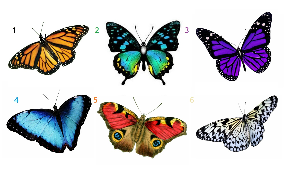 Pick a Butterfly to Get The Message You Need To Hear