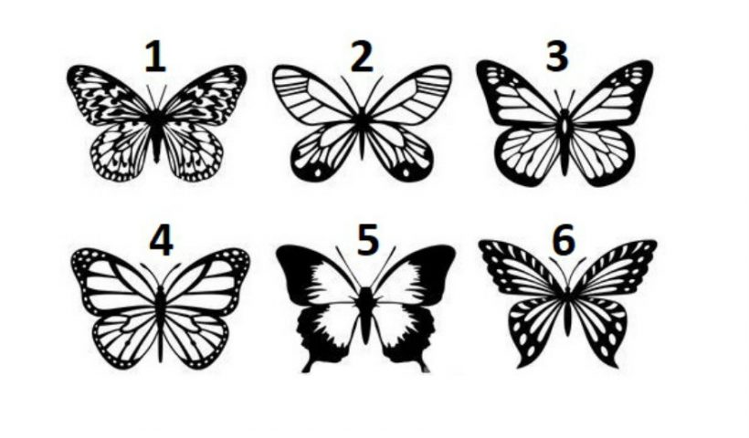 Pick a Butterfly to Ignite Your Light