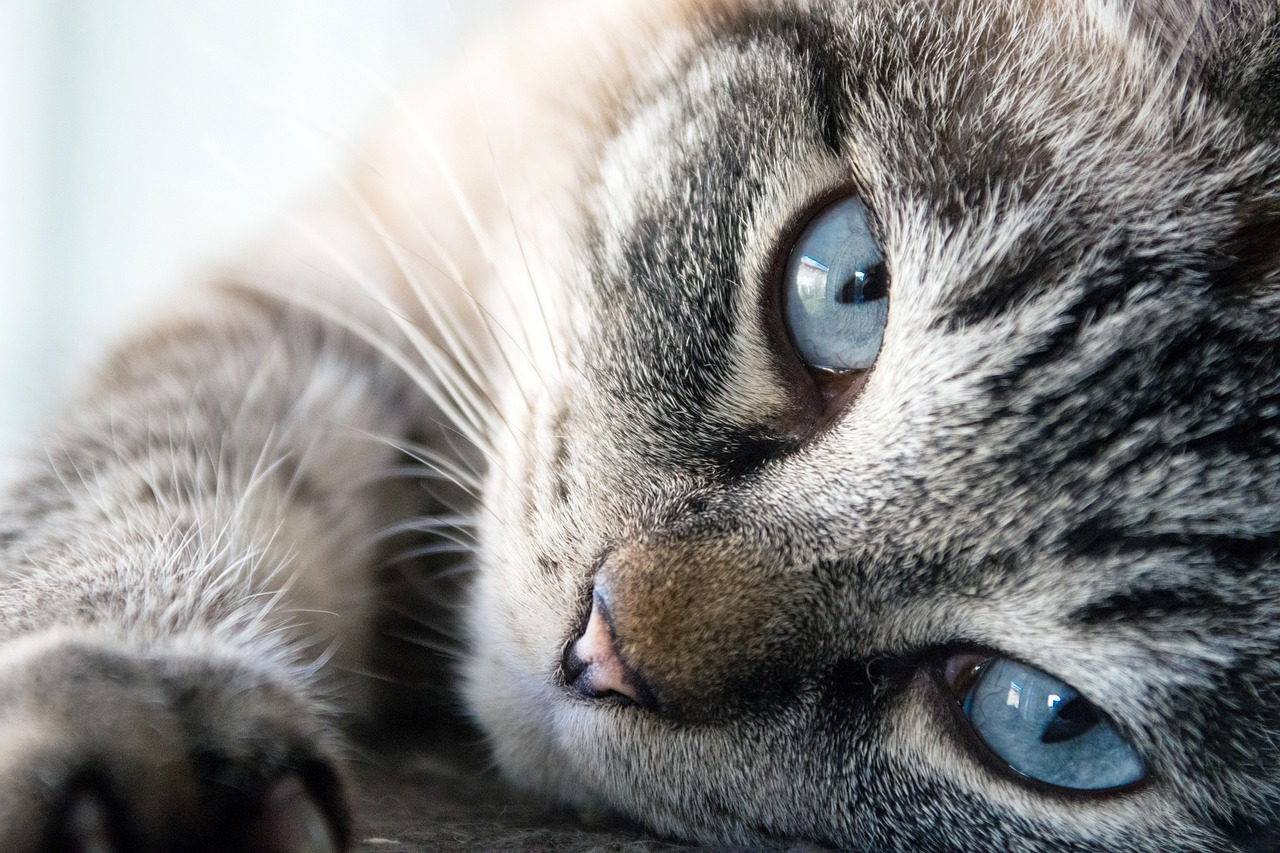 Cats are Protecting You And Your Home From Ghosts And Evil Spirits
