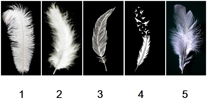 Choose a Angel Feather and Discover the Message of Your Angels