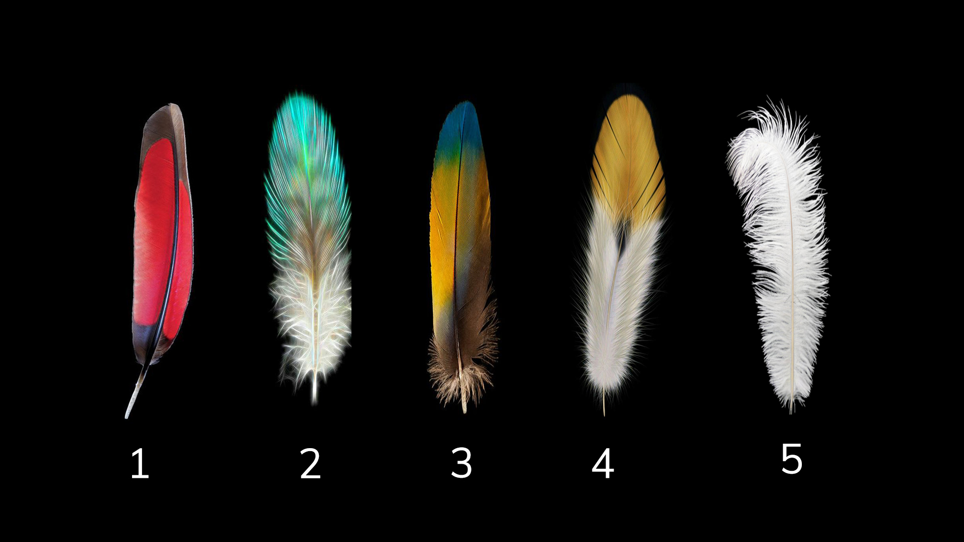 Choose a Feather and Find Out What Changes Will Help You In Life