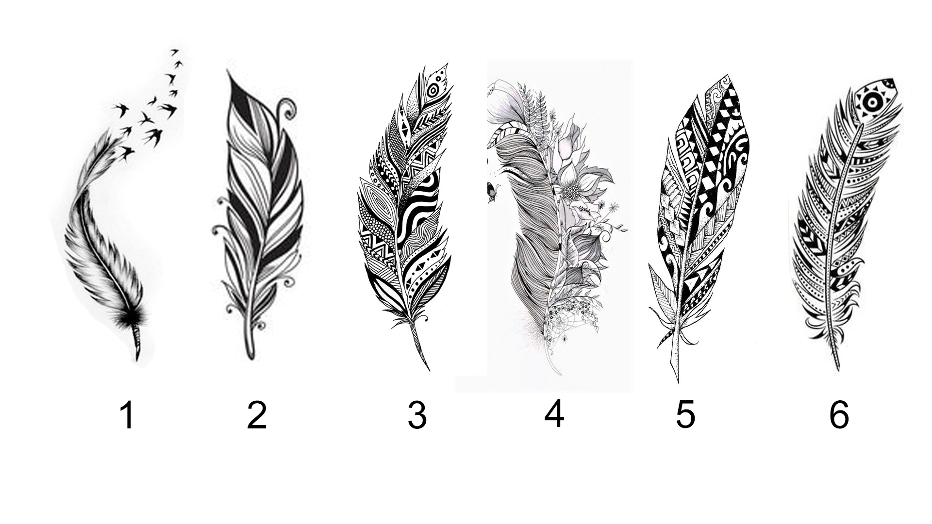 Pick a Feather to Reveal Prophetic Message