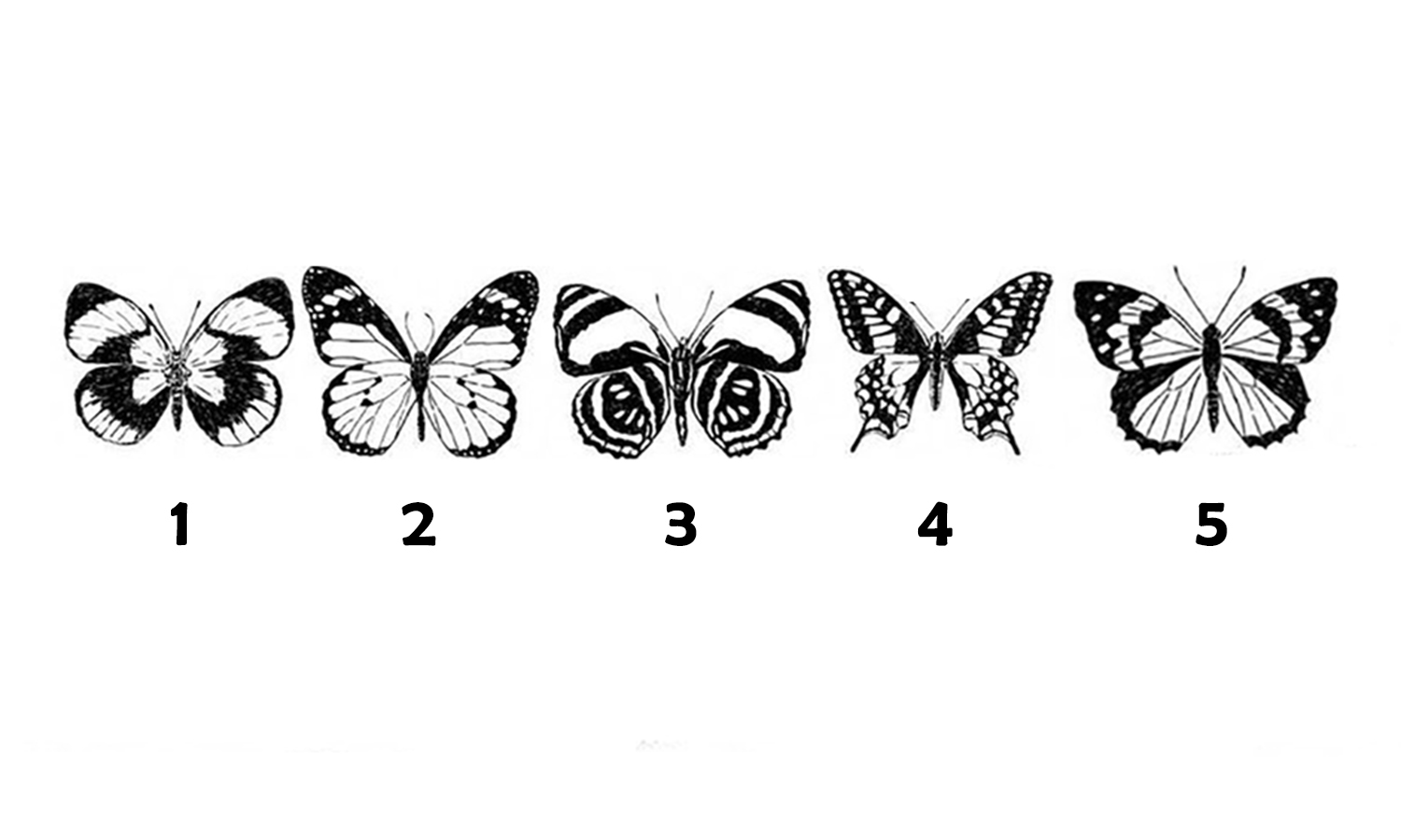 Pick a Butterfly to Find Out What to Focus This Week
