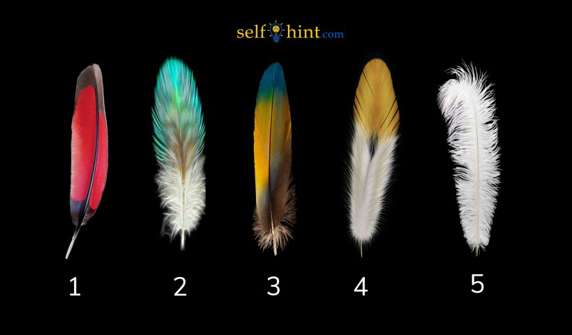 Pick a Feather to Find Out What to Focus