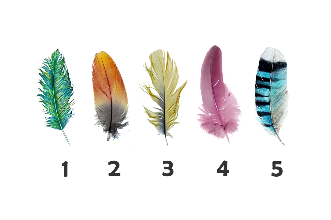 Tap on a Feather To Get Psychic Message